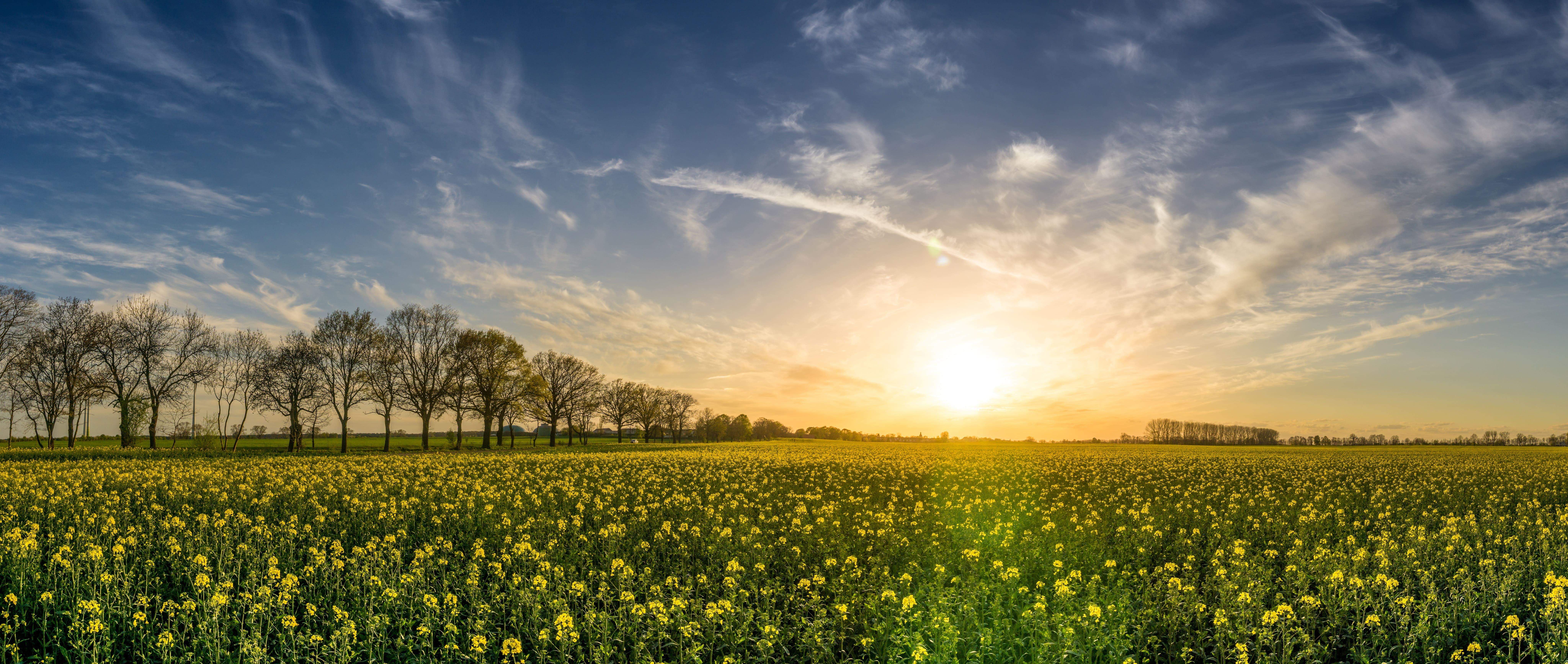 paysage - photo d'un champs de fleurs vert avec un levé de soleil en fond